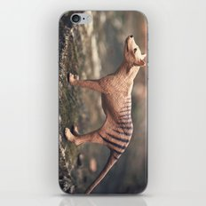 The Last Thylacine iPhone & iPod Skin