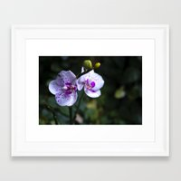 orchid Framed Art Prints featuring Orchid by MVision Photography