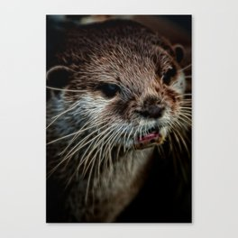 Otters Sweet Face Canvas Print