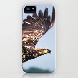 Immature Bald Eagle iPhone Case