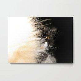Fluffy Calico Cat Metal Print