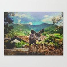Pippin Canvas Print