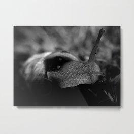 Aylen Metal Print
