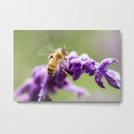 European Honey Bee Metal Print