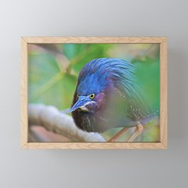 The Green Heron at Ding II Framed Mini Art Print