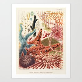 Great Barrier Reef Echinoderms from The Great Barrier Reef of Australia (1893) by William Saville-Ke Art Print