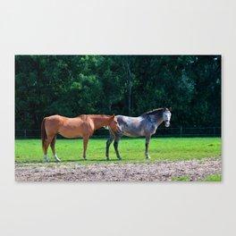 Pasture Friends Canvas Print