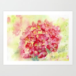 Ruby Tuesday Hydrangea Art Print