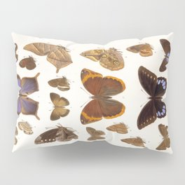 Vintage Scientific Insect Butterfly Moth Biological Hand Drawn Species Art Illustration Pillow Sham