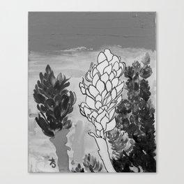 Alpinia purpurata – Red Ginger Flower - Black and White Greyscale Canvas Print