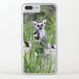 Lemurs are sitting among the green grass. Clear iPhone Case