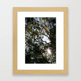 Reaching for the Light Framed Art Print