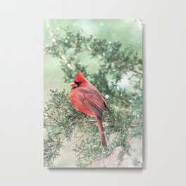 Christmas Bird (Northern Cardinal) Metal Print