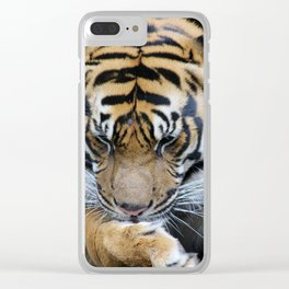 Milk Paws Clear iPhone Case