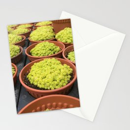 Close up shot of Mini Moss Pot at Cameron highlands Cactus Point . Stationery Cards