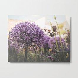 purple decorative garlic Metal Print