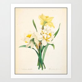 Flower Color Pencil Hand Drawing Art Print