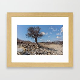 Beach Tree Framed Art Print