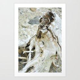 Deer Isle Series: Sea Stump Art Print