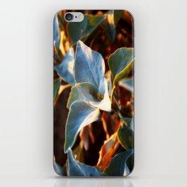 Desert Leaves II iPhone Skin
