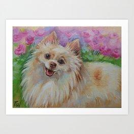 White Pomeranian in the rose garden Cute miniature spitz dog portrait Oil painting on canvas Art Print