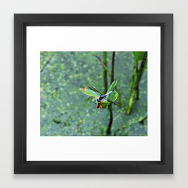 Fly Fly Away Framed Art Print