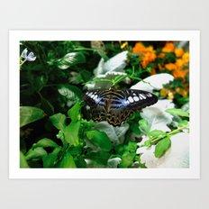 Butterfly - 4 Art Print