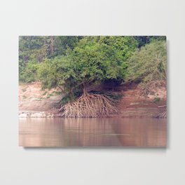 Mangrove Trees on the Mekong River Bank Laos Metal Print