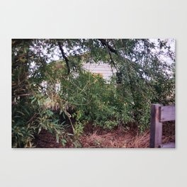 house obscured by foliage Canvas Print