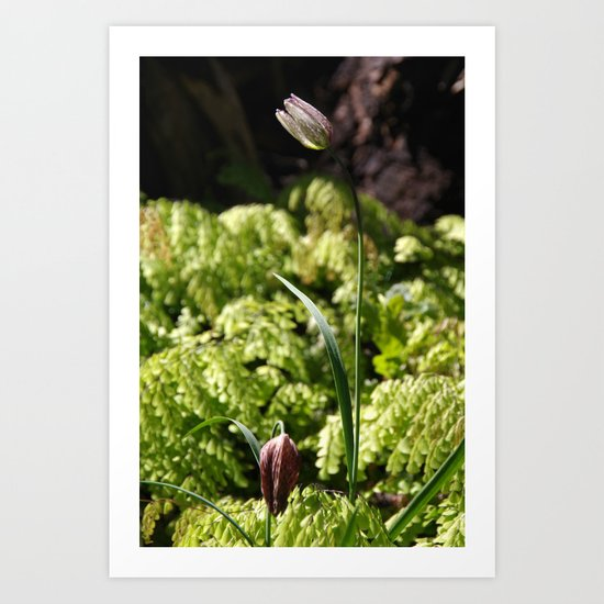 Chocolate Lilies Art Print