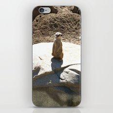 Just a meer kat... iPhone & iPod Skin