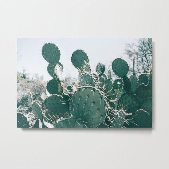 Arizona Cactus II Metal Print