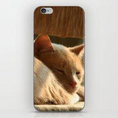 Cat Nap iPhone & iPod Skin
