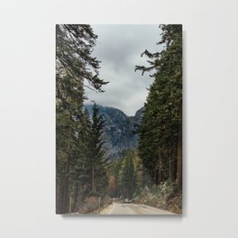 sequoia Metal Print