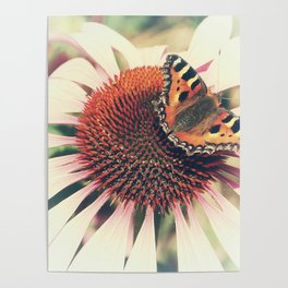 The Butterfly and the Flower Poster