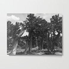 leaning trees Metal Print