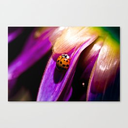 Lady Bug on Flower Canvas Print