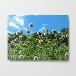 Fuzzy Pom Pom Flowers on a Grassy Hilly Slope on a Summer Day Metal Print