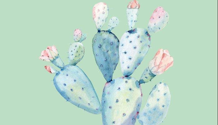 Rose Desert Cactus Light Mint Green by Nature Magick Pillow Sham