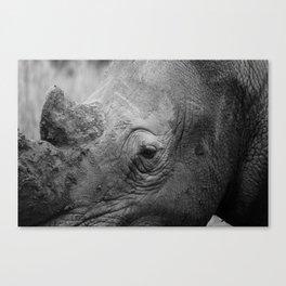 In the eye of the Rhino Canvas Print