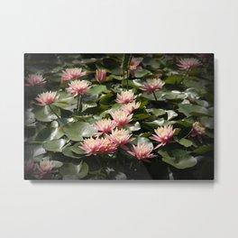 Pond in bloom Metal Print