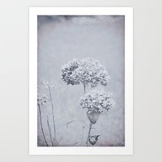 Dried Hydrangea Flowers Dreamy Monochrome Cool Tones Autumn Botanical Art Print