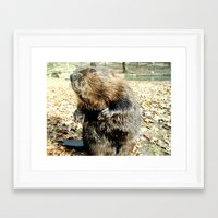beaver Framed Art Prints featuring BEAVER by Sofia Youshi