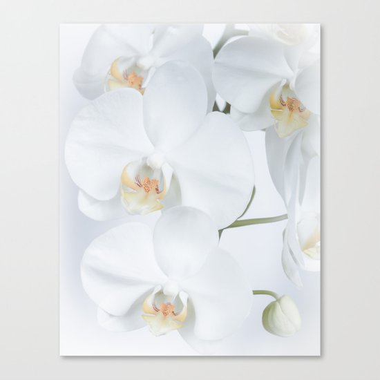 White orchids flowers pure white romantic Canvas Print