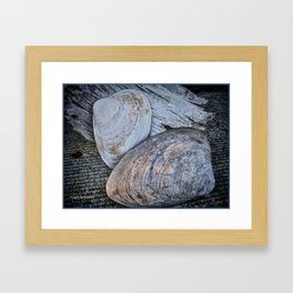 Driftwood and Sea Shells Framed Art Print