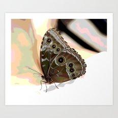 Bulls Eye Butterfly Art Print