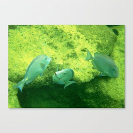 Water Ballet Canvas Print