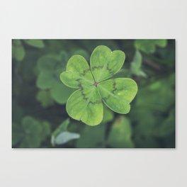 Four Leaf Clover - Plants Photography Canvas Print