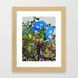 French Blue Morning Glory Framed Art Print