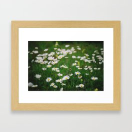 Сamomile Framed Art Print